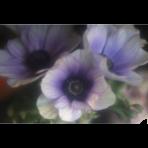 ks_flower_001