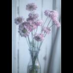 ks_flower_003