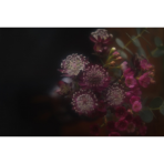 ks_flower_004