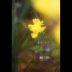 ks_flower_005