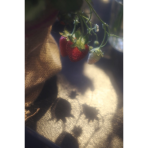 ks_flower_006