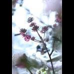 ks_flower_011