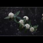ks_flower_012