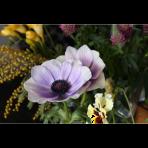 ks_flower_018