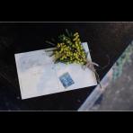 ks_flower_019