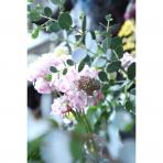 ks_flower_020